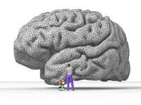 Как заставить мозг работать?