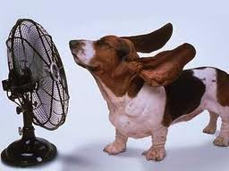 Как избежать теплового удара