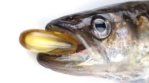 Рыбий жир. Польза и вред